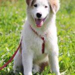 Бьянка собака из приюта на пристройство частный приют для собак Зов Предков фото 4
