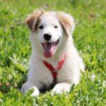 Бьянка собака из приюта на пристройство частный приют для собак Зов Предков фото 8
