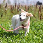 Бьянка собака из приюта на пристройство частный приют для собак Зов Предков фото 1