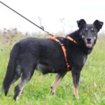 Диана собака из приюта на пристройство, частный приют для бездомных животных Зов Предков zovpredkov.net фото 2