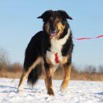 Фэнди собака из приюта на пристройство, частный приют для бездомных животных Зов Предков zovpredkov.net фото 14