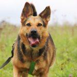 Эллада собака из приюта на пристройство, частный приют для бездомных животных Зов Предков zovpredkov.net фото 7