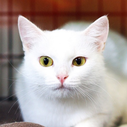 Бэлла  кошка из приюта  для бездомных животных Зов Предков на пристройство  zovpredkov.net