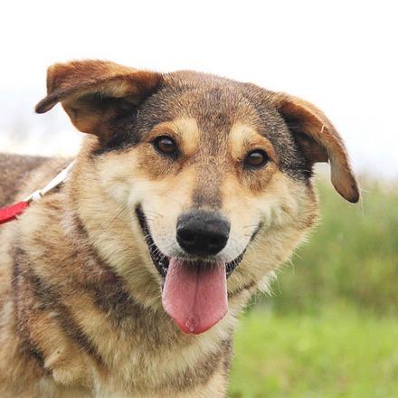 Донна собака из приюта на пристройство, частный приют для бездомных животных Зов Предков zovpredkov.net