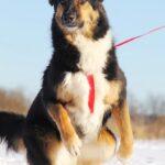 Фэнди собака из приюта на пристройство, частный приют для бездомных животных Зов Предков zovpredkov.net фото 13