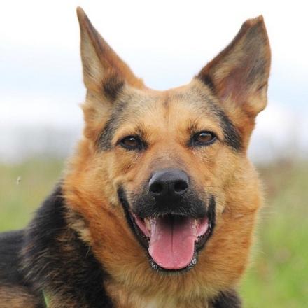 Эллада собака из приюта на пристройство, частный приют для бездомных животных Зов Предков zovpredkov.net