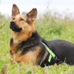 Эллада собака из приюта на пристройство, частный приют для бездомных животных Зов Предков zovpredkov.net фото 5