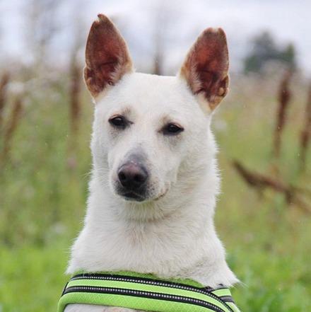 Маршал собака из приюта на пристройство, частный приют для бездомных животных Зов Предков zovpredkov.net