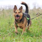 Эллада собака из приюта на пристройство, частный приют для бездомных животных Зов Предков zovpredkov.net фото 2
