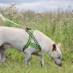 Маршал собака из приюта на пристройство, частный приют для бездомных животных Зов Предков zovpredkov.net фото 3