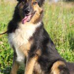 собака из приюта на пристройство, частный приют для бездомных животных Зов Предков zovpredkov.net фото 5