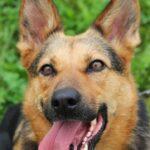 Эллада собака из приюта на пристройство, частный приют для бездомных животных Зов Предков zovpredkov.net фото 8