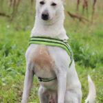 Маршал собака из приюта на пристройство, частный приют для бездомных животных Зов Предков zovpredkov.net фото 6