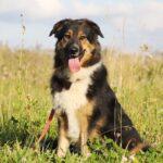 Фэнди собака из приюта на пристройство, частный приют для бездомных животных Зов Предков zovpredkov.net фото 1