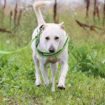 Маршал собака из приюта на пристройство, частный приют для бездомных животных Зов Предков zovpredkov.net фото 2