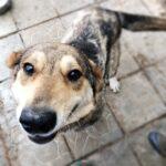 Донна собака из приюта на пристройство, частный приют для бездомных животных Зов Предков zovpredkov.net фото 7