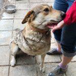 Донна собака из приюта на пристройство, частный приют для бездомных животных Зов Предков zovpredkov.net фото 4