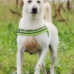 Маршал собака из приюта на пристройство, частный приют для бездомных животных Зов Предков zovpredkov.net фото 7