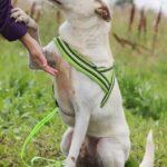 Маршал собака из приюта на пристройство, частный приют для бездомных животных Зов Предков zovpredkov.net фото 5