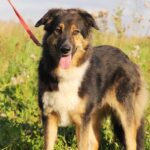 собака из приюта на пристройство, частный приют для бездомных животных Зов Предков zovpredkov.net фото 2
