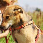 Чейз собака из приюта на пристройство, частный приют для бездомных животных Зов Предков zovpredkov.net фото 2