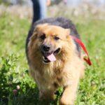 Миледи собака из приюта на пристройство, частный приют для бездомных животных Зов Предков zovpredkov.net фото 5