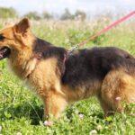 Миледи собака из приюта на пристройство, частный приют для бездомных животных Зов Предков zovpredkov.net фото 4