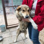 Донна собака из приюта на пристройство, частный приют для бездомных животных Зов Предков zovpredkov.net фото 3