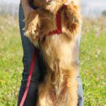 Миледи собака из приюта на пристройство, частный приют для бездомных животных Зов Предков zovpredkov.net фото 2