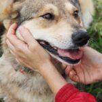 Донна собака из приюта на пристройство, частный приют для бездомных животных Зов Предков zovpredkov.net фото 2