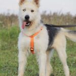 Ирис собака из приюта на пристройство, частный приют для бездомных животных Зов Предков zovpredkov.net фото 2