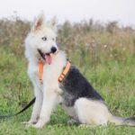 Ирис собака из приюта на пристройство, частный приют для бездомных животных Зов Предков zovpredkov.net фото 4
