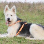 Ирис собака из приюта на пристройство, частный приют для бездомных животных Зов Предков zovpredkov.net фото 5