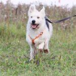 Ирис собака из приюта на пристройство, частный приют для бездомных животных Зов Предков zovpredkov.net фото 1
