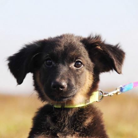 Андромеда щенок из приюта на пристройство
