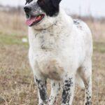 Шарм собака из приюта на пристройство частный приют Зов Предков фото 7