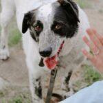 Шарм собака из приюта на пристройство частный приют Зов Предков фото 3