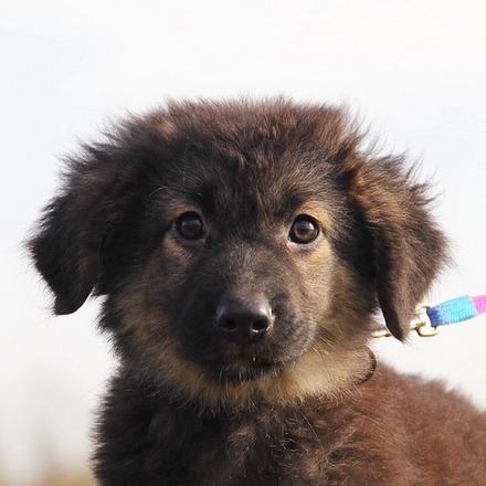 Кассиопея щенок из приюта на пристройство