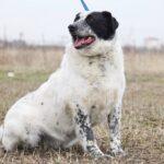 Шарм собака из приюта на пристройство частный приют Зов Предков фото 9