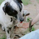 Шарм собака из приюта на пристройство частный приют Зов Предков фото 1