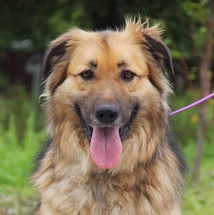 Гаврюша собака из приюта на пристройство, частный приют для бездомных животных Зов Предков zovpredkov.net