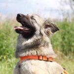 Джуди собака из приюта на пристройство, частный приют для бездомных животных Зов Предков zovpredkov.net фото 5