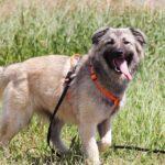 Джуди собака из приюта на пристройство, частный приют для бездомных животных Зов Предков zovpredkov.net фото 7