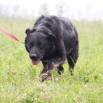 Шериф собака из приюта на пристройство, частный приют для бездомных животных Зов Предков zovpredkov.net фото 2