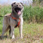 Джуди собака из приюта на пристройство, частный приют для бездомных животных Зов Предков zovpredkov.net фото 6