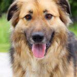 Гаврюша собака из приюта на пристройство, частный приют для бездомных животных Зов Предков zovpredkov.net фото 8