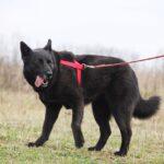 Васса собака из приюта на пристройство частный приют для собак Зов Предков фото 7