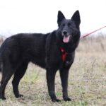 Васса собака из приюта на пристройство частный приют для собак Зов Предков фото 6