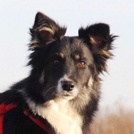 Смузи собака из приюта на пристройство частный приют для собак Зов Предков