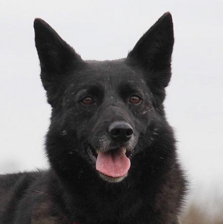 Васса собака из приюта на пристройство частный приют для собак Зов Предков